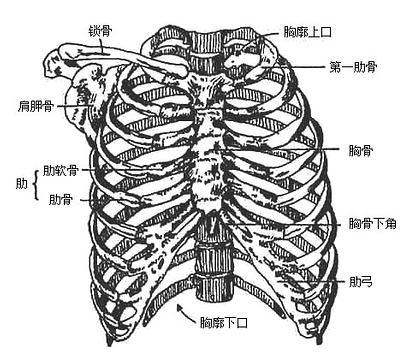 """【常见伤科之:""""胸部胁肋伤""""的治疗】"""